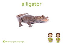 Alligator Flash Card Thumbnail