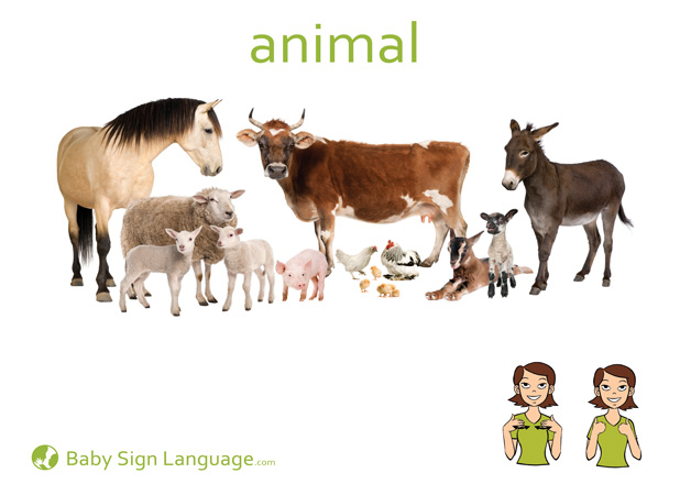 Animal Baby Sign Language Flash card