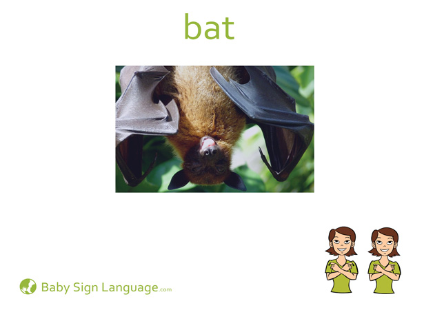 Bat Baby Sign Language Flash card