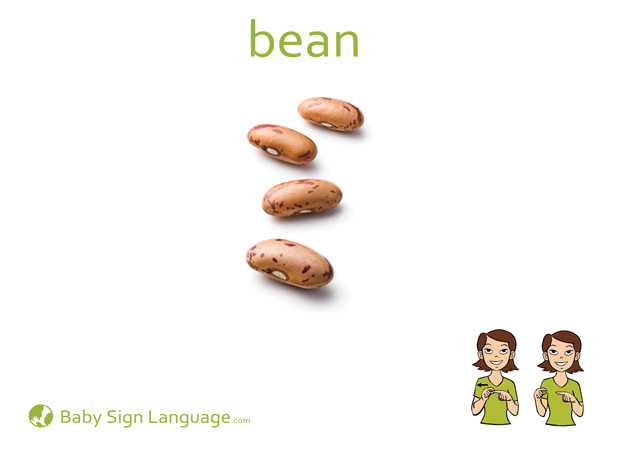 Bean Baby Sign Language Flash card