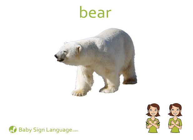 Bear Baby Sign Language Flash card