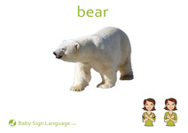 Bear Flash Card Thumbnail