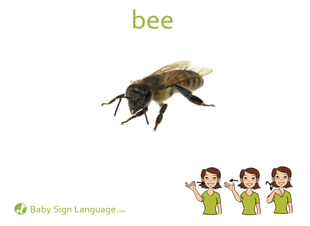 Bee Baby Sign Language Flash card