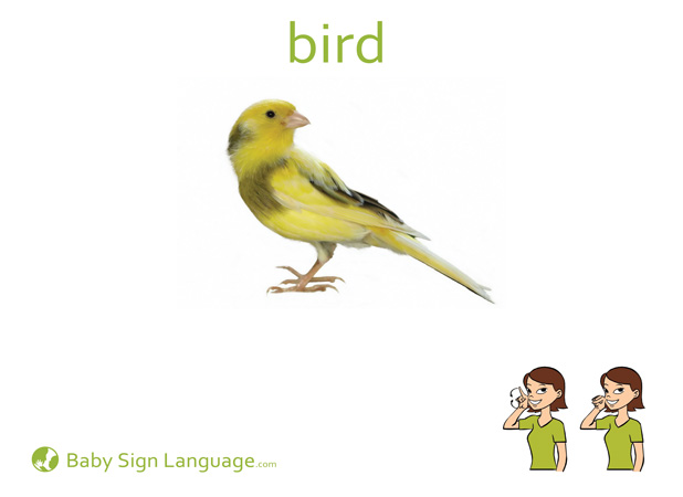 Bird Baby Sign Language Flash card