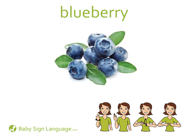 Blueberry Baby Sign Language Flash card