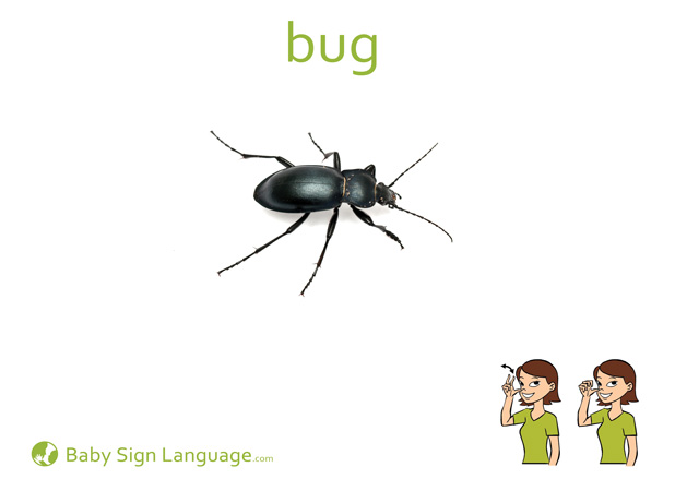 Bug Baby Sign Language Flash card
