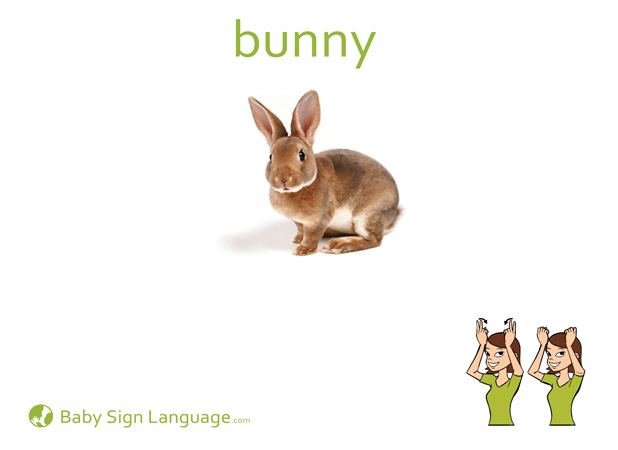 Rabbit Baby Sign Language Flash card