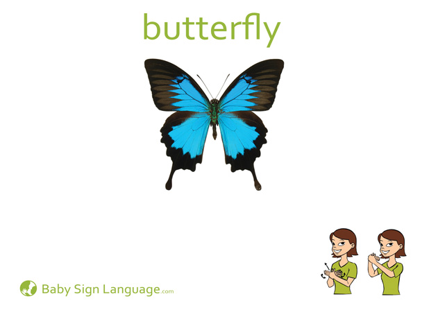 Butterfly Baby Sign Language Flash card