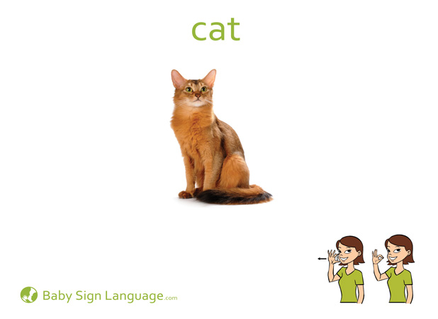 Cat Baby Sign Language Flash card