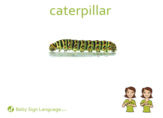 Caterpillar Baby Sign Language Flash card