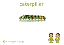 Caterpillar Flash Card Thumbnail
