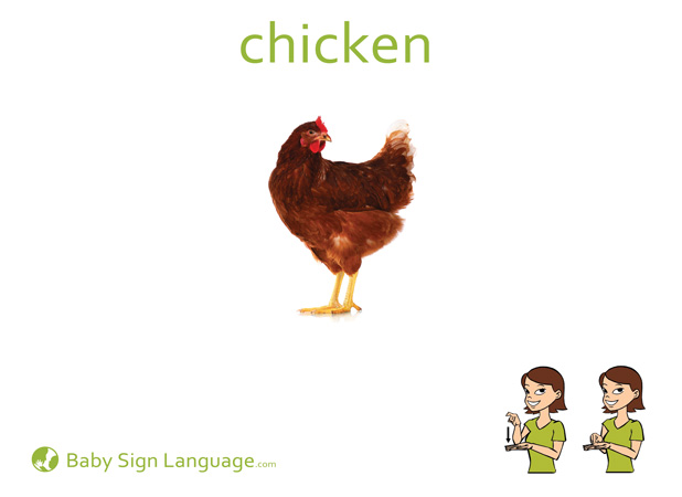 Chicken Baby Sign Language Flash card