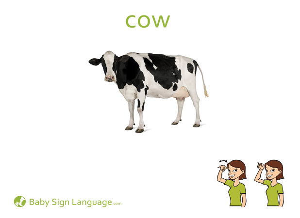 Cow Baby Sign Language Flash card