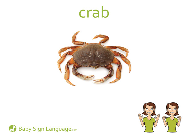 Crab Baby Sign Language Flash card