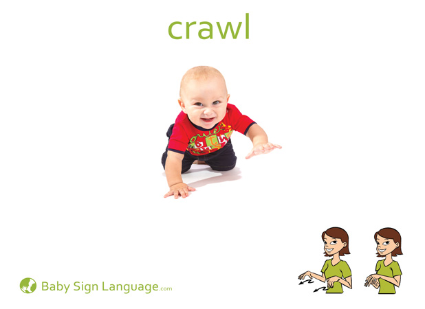 Crawl Baby Sign Language Flash card