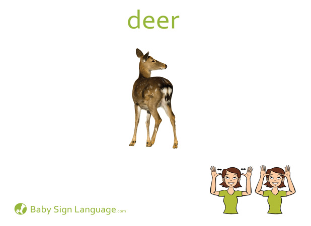 Deer Baby Sign Language Flash card
