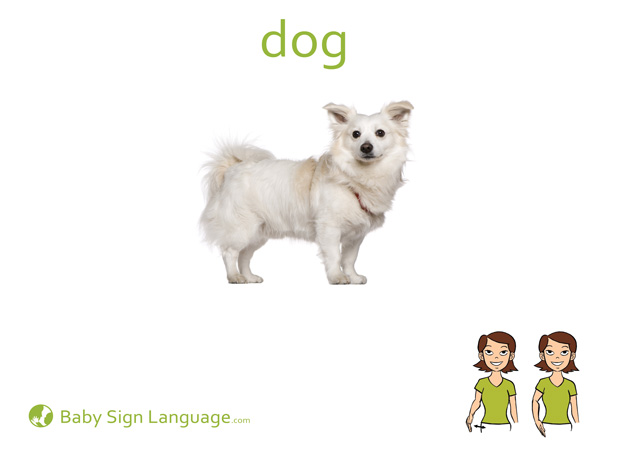 Dog Baby Sign Language Flash card