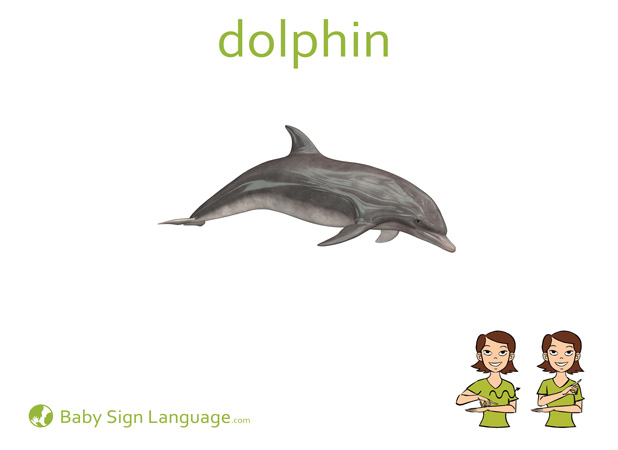 Dolphin Baby Sign Language Flash card