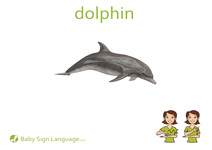 Dolphin Flash Card Thumbnail