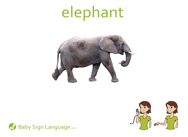 Elephant Baby Sign Language Flash card
