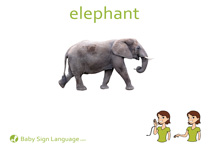 Elephant Flash Card Thumbnail