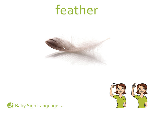 Feather Baby Sign Language Flash card