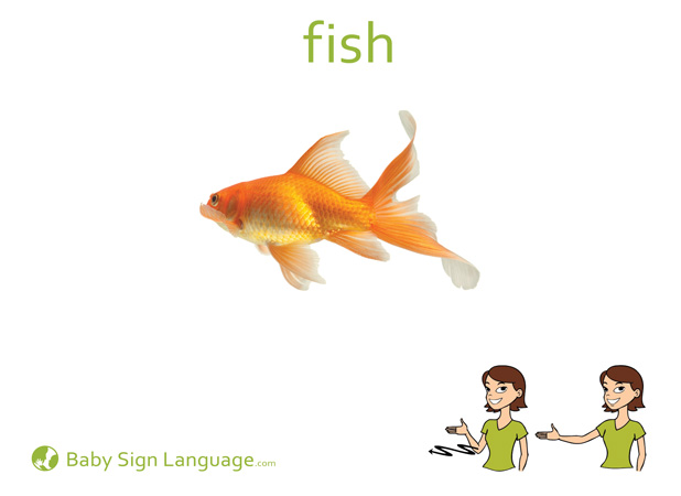 Fish Baby Sign Language Flash card