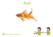 Fish Flash Card Thumbnail
