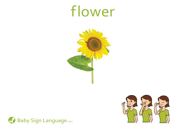 Flower Baby Sign Language Flash card