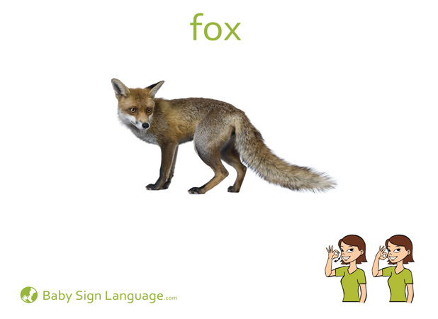 Fox Baby Sign Language Flash card