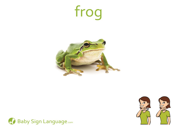 Frog Baby Sign Language Flash card
