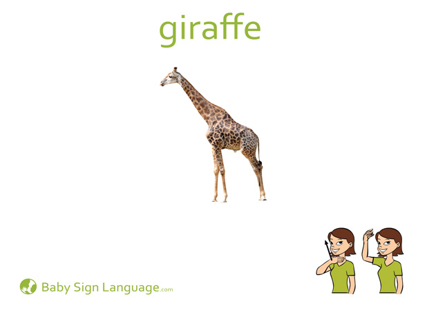Giraffe Baby Sign Language Flash card