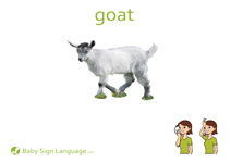 Goat Flash Card Thumbnail