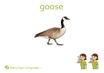 Goose Flash Card Thumbnail