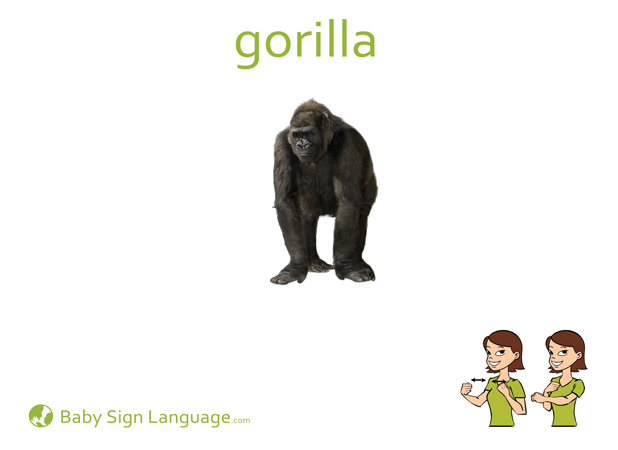 Gorilla Baby Sign Language Flash card
