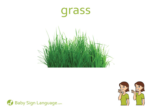 Grass Baby Sign Language Flash card