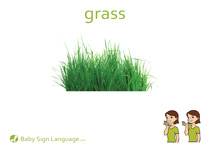Grass Flash Card Thumbnail
