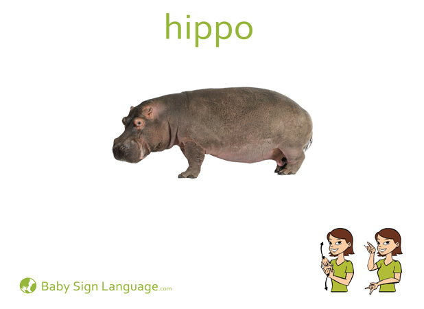 Hippo Baby Sign Language Flash card