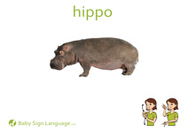 Hippo Flash Card Thumbnail