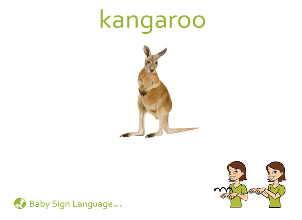 Kangaroo Baby Sign Language Flash card