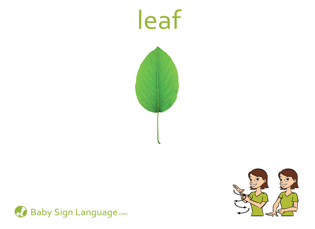 Leaf Baby Sign Language Flash card