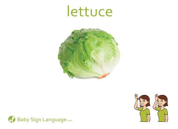 Lettuce Baby Sign Language Flash card