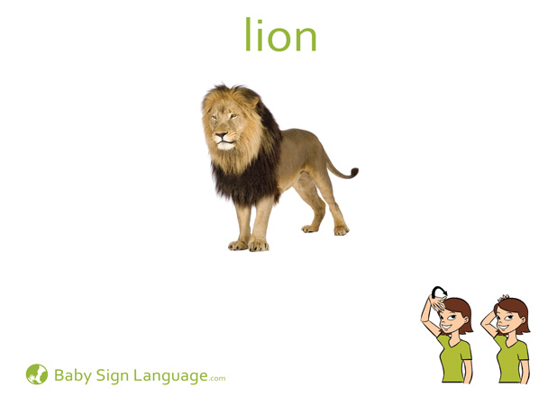 Lion Baby Sign Language Flash card