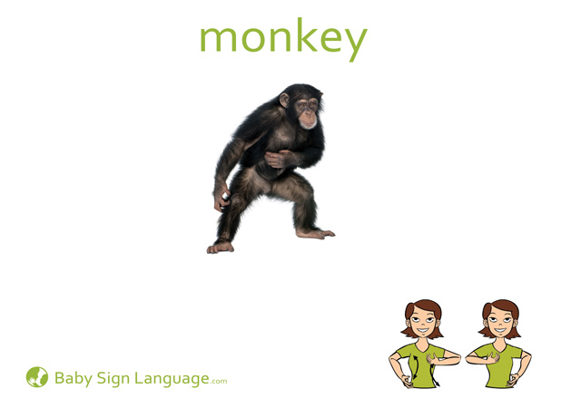 Monkey Baby Sign Language Flash card