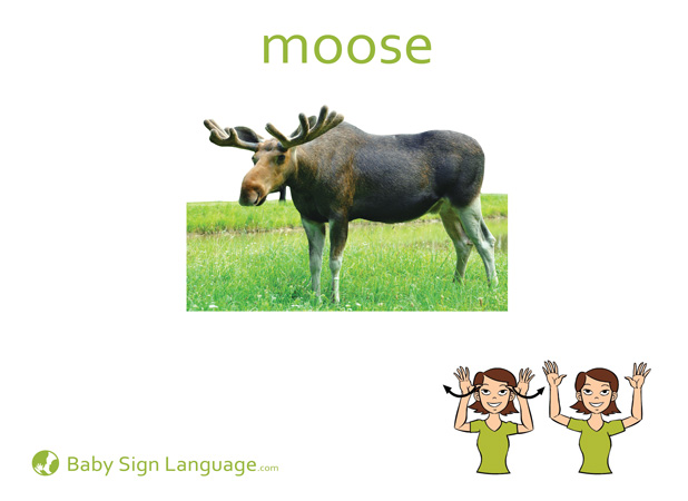 Moose Baby Sign Language Flash card