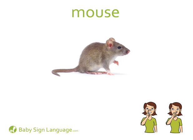 Mouse Baby Sign Language Flash card