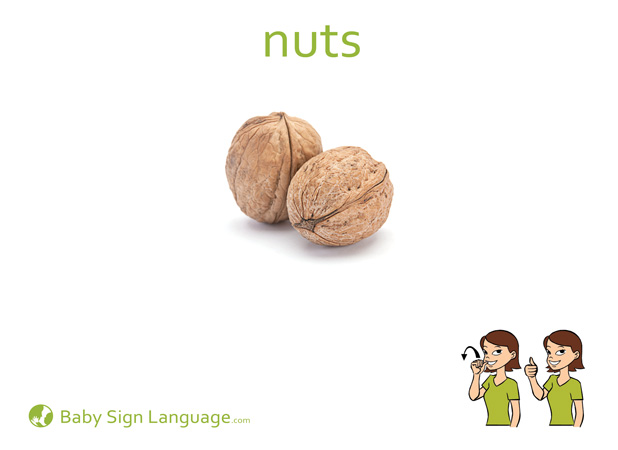 Nuts Baby Sign Language Flash card
