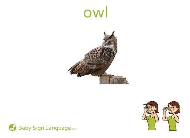 Owl Baby Sign Language Flash card