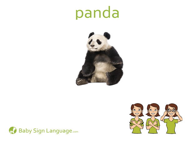 Panda Baby Sign Language Flash card/> </div> <div class=