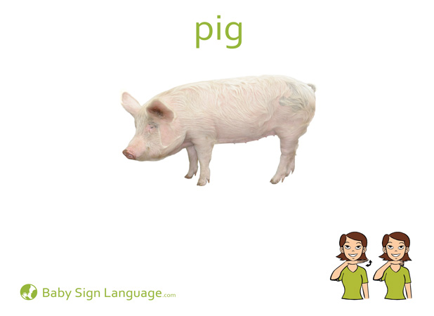 Pig Baby Sign Language Flash card